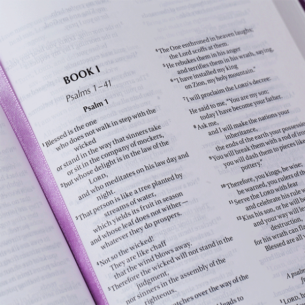 الكتاب المقدس باللغة الانجليزية للاطفال NIV - لون بنفسجي