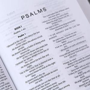 الكتاب المقدس باللغة الانجليزية لحقيبة الظهر NIrV - لون رمادي واحمر