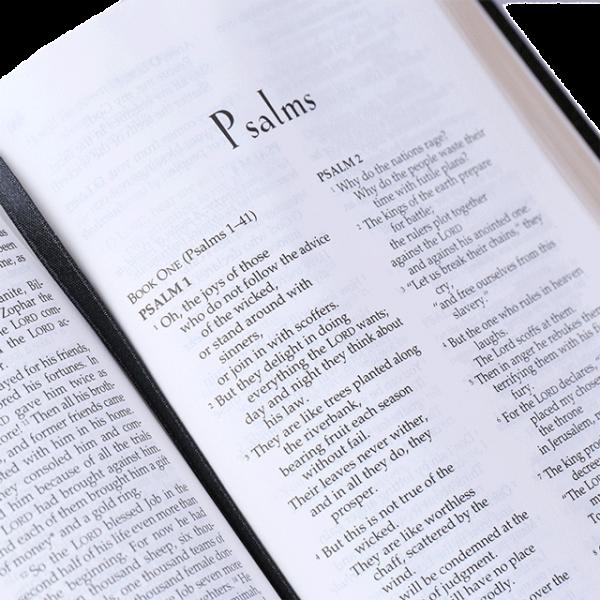 الكتاب المقدس الشخصي باللغة الانجليزية NLT